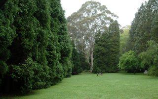 Celestium Lawn