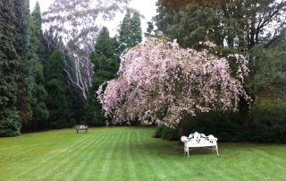 Celestium Lawn with Flowering Cherry