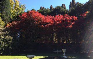 Compass Garden - Acer japonica