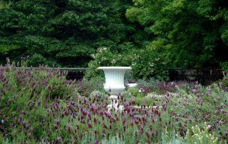 Lavender in Celestium