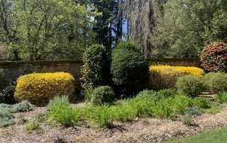Socrates Garden